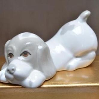 Играющая собака. Испания