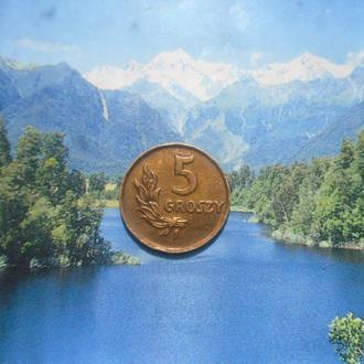 Польша 5грошей 1949г