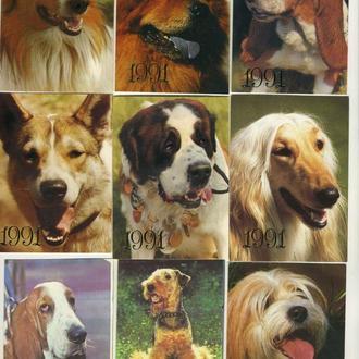 Карманные календарики Животные Собаки 9 шт. (№3)