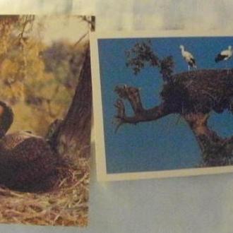 СССР открытка птицы 2 шт.