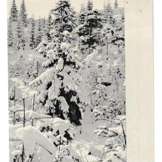 Открытка З Новим Роком!, подпис. 1965 г., худ. Пашута