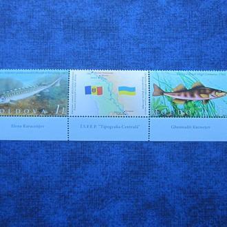 Сцепка 2 марки + купон Молдова 2007 фауна рыбы совместный выпуск с Украиной MNH