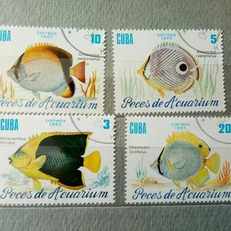 Фауна Куба 1985