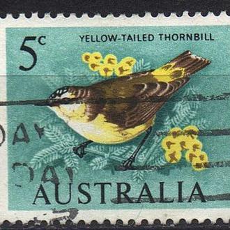 1966 - Австралия - Стандарт - Птицы Mi.362