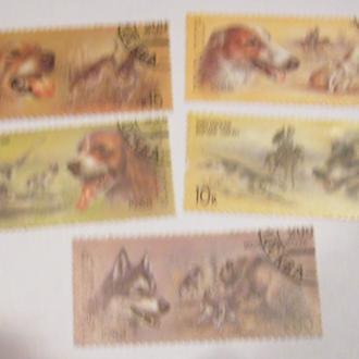 Отечественные породы охотничьих собак 1988