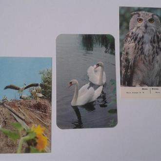 Календарик. Птахи.1988-1989 рр.