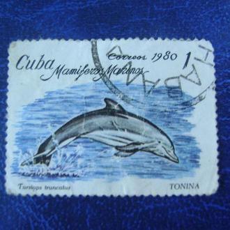 Куба. Общий Дельфин Бутылконоса (Tursiops truncatus)