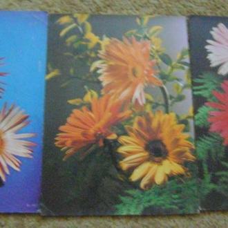 Квіткова композиція (12шт) видавництво Братіслава