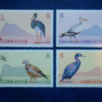 птицы фауна гибралтар ви