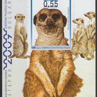 фауна Болгария-2008 зоопарк. Блок сурикаты (кц 25е)