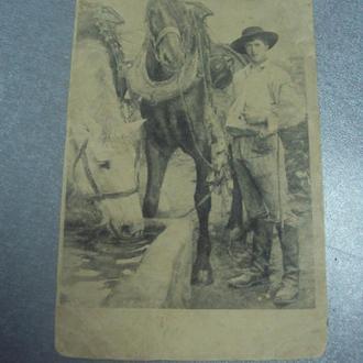 открытка конюх с лошадьми №1616