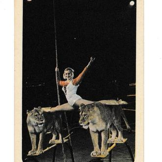 Календарик 1974 Цирк, львы