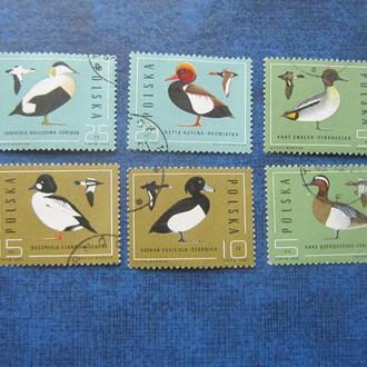 6 марок Польша 1985 птицы
