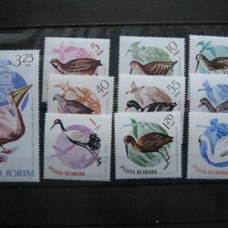 птицы фауна   birds румыния ме т