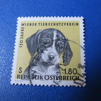 Фауна Собаки Австрия