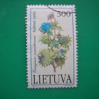 Литва Цветы   *