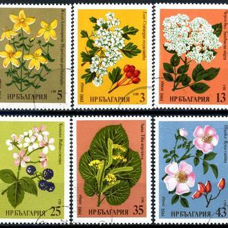 Болгария. Цветы (серия) 1981 г.