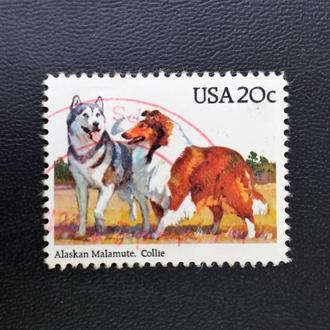 почтовая марка США служебные собаки