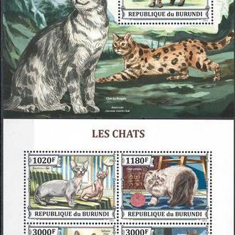 фауна Бурунди-2013 домашние кошки