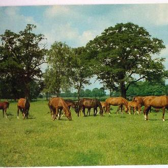 ГДР 1988 фауна лошади