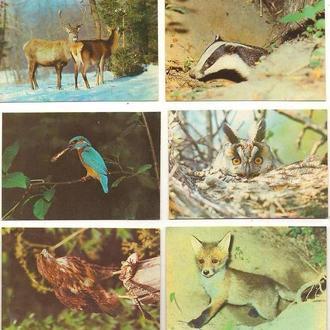 Фауна. Набор календарей ежемесячников 1990г. МИР ЖИВОТНЫХ