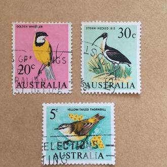 Австралия/ 1966/ птицы/ фауна