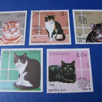 Фауна Коти Кошки Коты Лаос