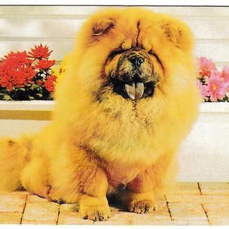 Календарик 1999 Собака