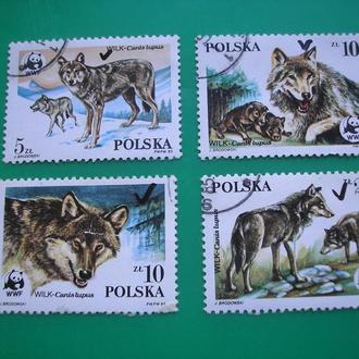 Польша 1985  Волки  * Полн. сер.
