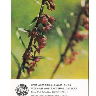 Календарик 1984 Флора, Латвия