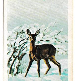 Календарик 1984 Фауна, серна, Болгария