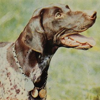 Открытки «Собаки», 4 шт. 1969 г.