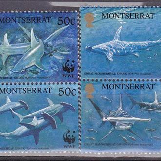 Монтсерат акулы MNH