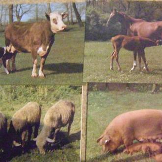 Свійські тварини 1985-1986рр-16шт  Братіслава