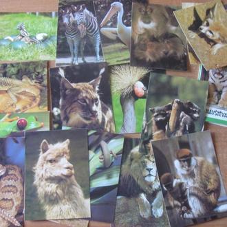Набор цветных открыток Чехия «Животные в Зоо» . Дешево