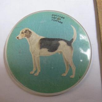 Значок Фауна Собаки Значки