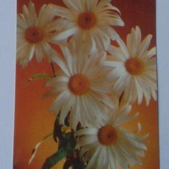 Календарик. Квіти, ромашки. 1990р.