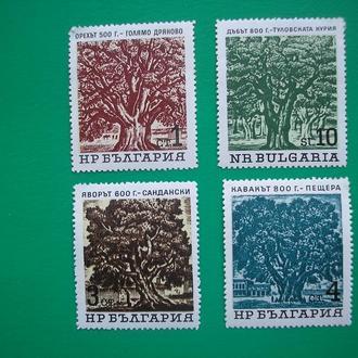 Болгария 1962 Старые  деревья  *