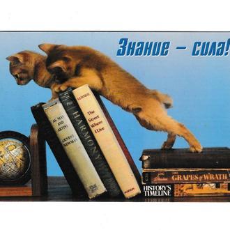 Открытка Знание - Сила, Кошки