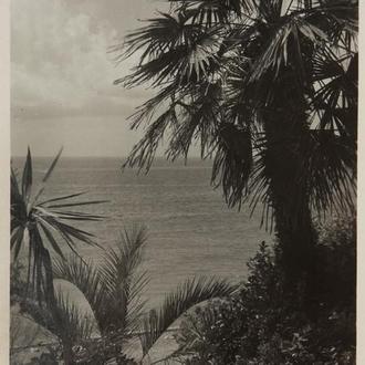 Открытка. Сочи, 1949 г. (115)