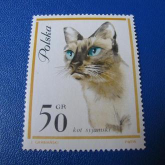Фауна Коти Кошки Коты Польща Польша