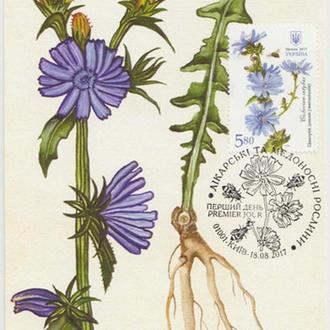 Картмаксимум Лікарські рослини - Цикорій дикий