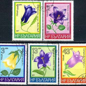 Болгария. Цветы (серия) 1977 г.