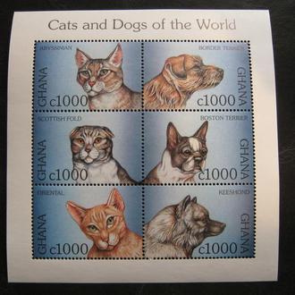 фауна кошки  собаки гана сл на  Т