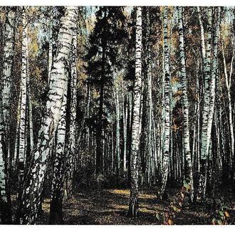 Календарик ПЛАСТИК 1991 Ингосстрах, лес, природа