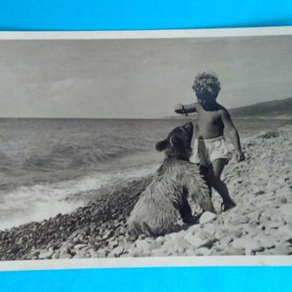 Открытка. Друзья. Ребенок и Медведь. медвежонок. дети. фото Р. Мазелева. 1957 г.