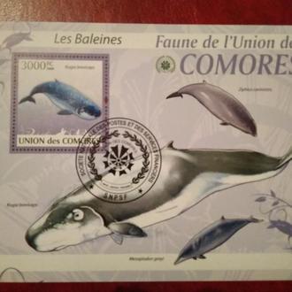 Киты Comores