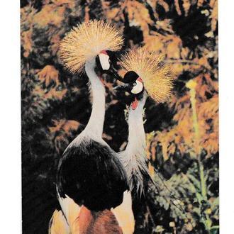 Открытка 1985 Венценосные журавли