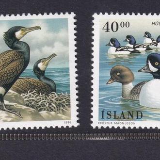 Исландия 1996 - фауна птицы**