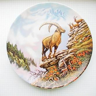 №64 Тарелка красивая настенная декоративная Швейцария Архар фарфор № 5168 1993 d 20,5 см